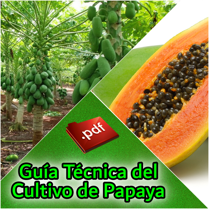 Guía Técnica del Cultivo de Papaya