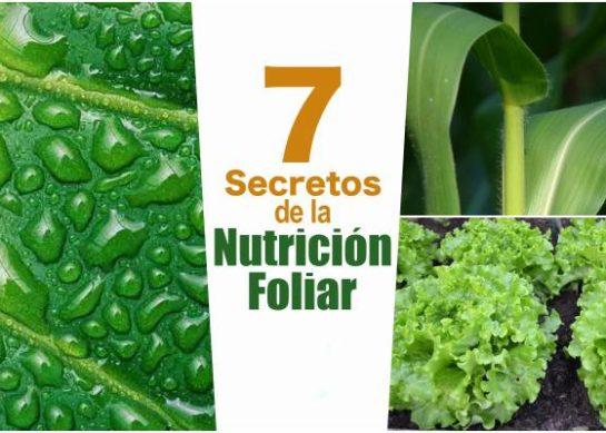 Los 7 secretos de la Nutrición Foliar